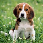 Interprétation du rêve d'Elisabeth : Manger son chien