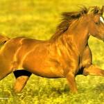 Rêves : rêver de cheval