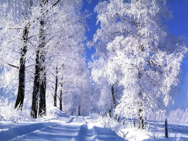 reves-neige-clairemedium