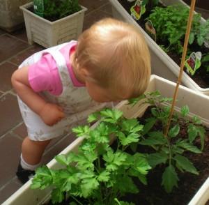 huiles-essentielles-sentir-plante-clairemedium