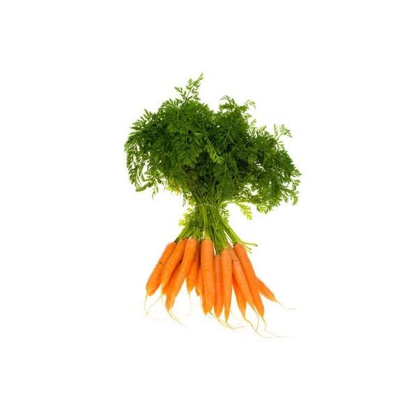 carotte-clairemedium