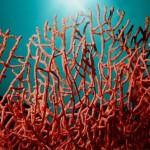 Pierres : le corail