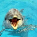 Interprétation du rêve de Patricia : contact avec un dauphin