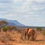 Planète : Immersion au pays des éléphants