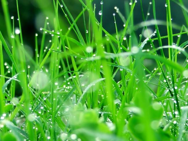 herbe-clairemedium