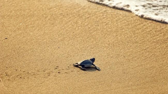 Notre planete tortue sable claire thomas medium