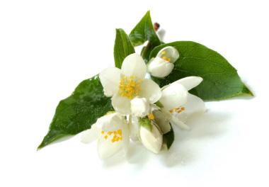 jasmin-clairemedium