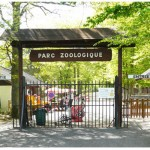 Rêves : rêver de zoo