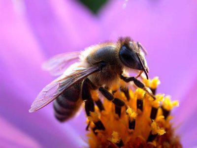 notre planete abeille claire thomas medium