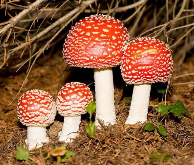 champignon-clairemedium