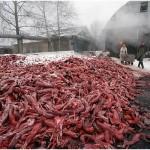 Planète : Le triste retour en force de la fourrure