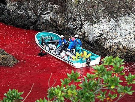 claire thomas medium taiji dauphin sang notre planete