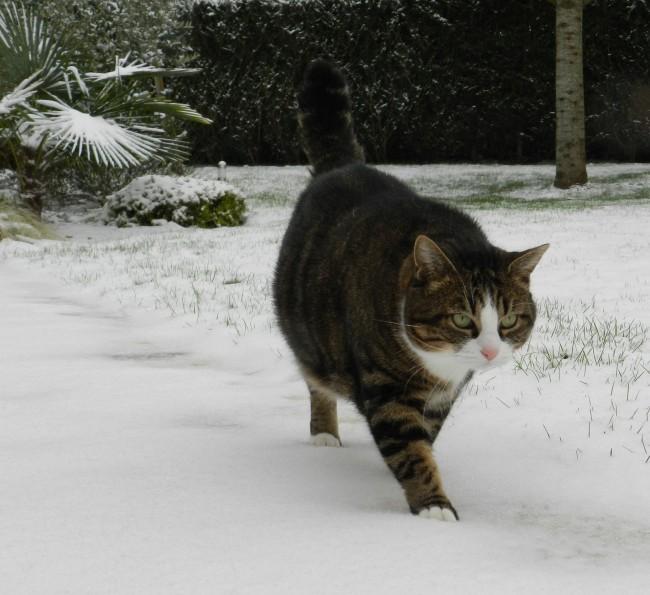 claire thomas medium chat neige notre planete