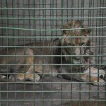 Notre planète : la face cachée des zoos