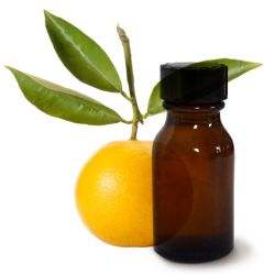 orangedouce-clairemedium