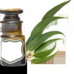 Huile essentielle : eucalyptus citriodora