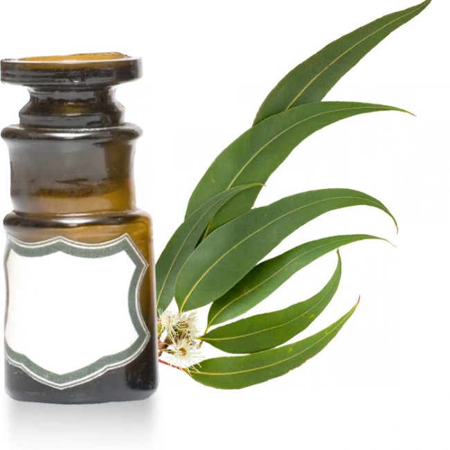 eucalyptus-citriodora-clairemedium