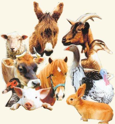 animaux2-clairemedium