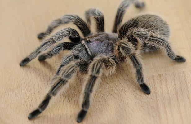 araignée-clairemedium