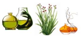 palmarosa-clairemedium