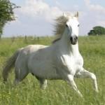 Que signifie mon rêve sur les chevaux ?