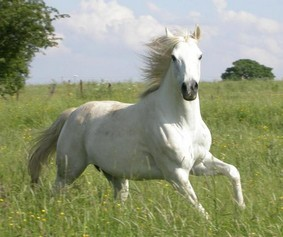 cheval-blanc-clairemedium