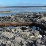 Notre planéte : La forêt enterrée