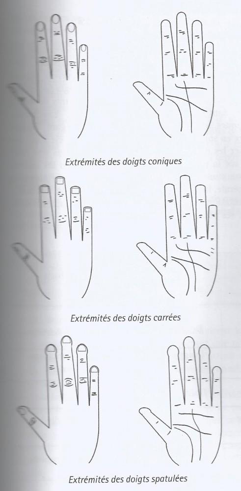 extrémités des doigts