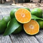Huile essentielle de mandarine verte