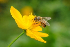 Le miel, un trésor de Mère Nature.