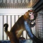 Expérimentation animale : le Moyen Âge de la science