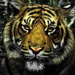 Interprétation du rêve de Fathia : Le tigre et l'argent