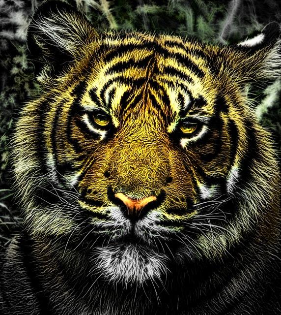 tigre reve claire medium