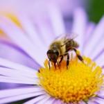 Les abeilles sont en danger!