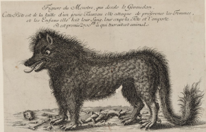 La bête du Gévaudan (source : estampe, dans Estampes relatives à l'Histoire de France, 1762, BNF)