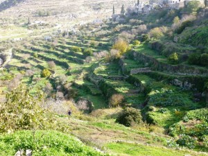 terre des oliviers