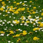Conseils : utiliser des plantes pour maigrir
