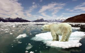 fonte glaciers
