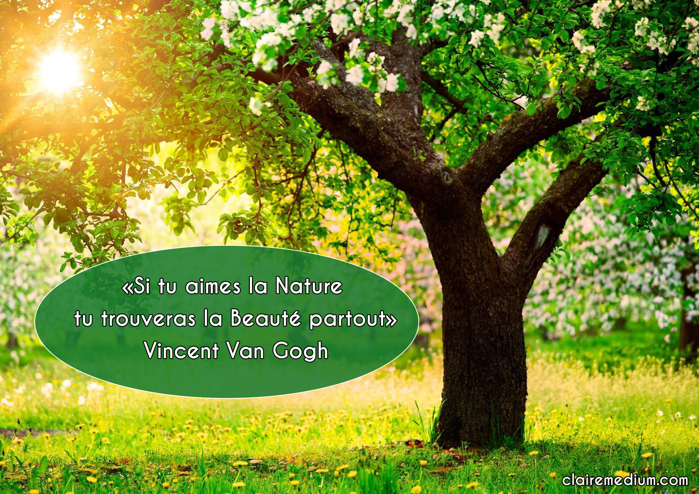 La citation du jour par Vincent Van Gogh