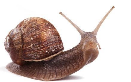 """Résultat de recherche d'images pour """"escargot"""""""