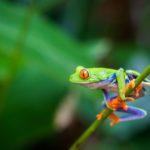 Rêves : rêver de grenouille