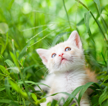 Rêves : rêver de chat