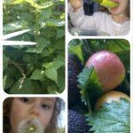 Gaspacho orties, pommes et avocat