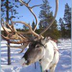 Rêves : rêver de renne