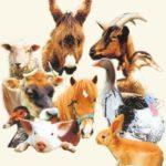 Rêves : rêver d'animaux