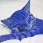 Interprétation du rêve d'Alexandra : Le chat violet