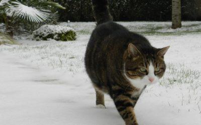Notre planète : protégez vos animaux pendant l'hiver !