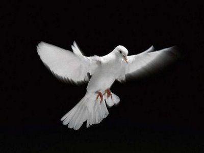Rêves : rêver de colombe