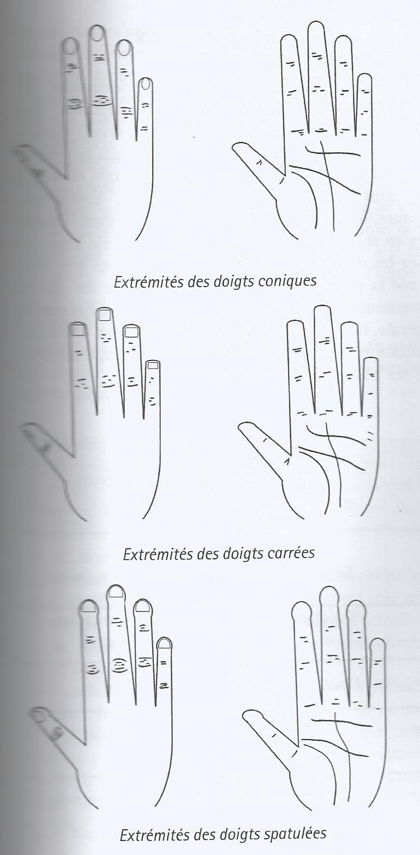 Chiromancie : les extrémités des doigts