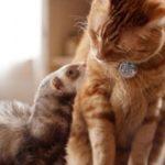 Interprétation des rêves de Valérie : 2 chats et un furet